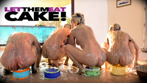 Messy Girls 6: Let Them Eat Cake! Featuring Jillian Janson, Melissa Moore, Sasha Heart, Sabrina Blair